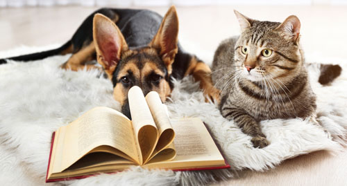 Dog and cat with book